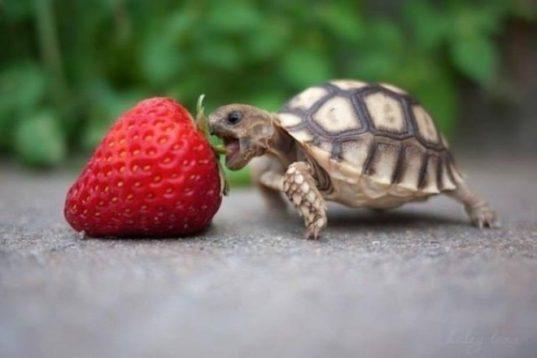 Какой сегодня праздник: 23 мая 2018 года Всемирный день черепахи!