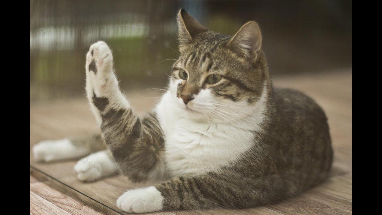 картинки с говорящими котами военных сообщений является