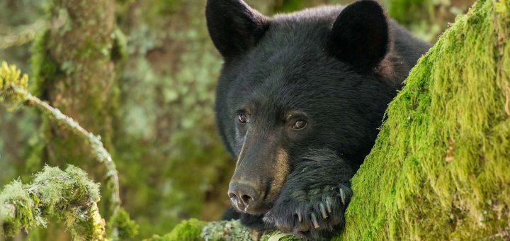 Потерявшийся в лесу мальчик сказал, что провёл два дня с медведем