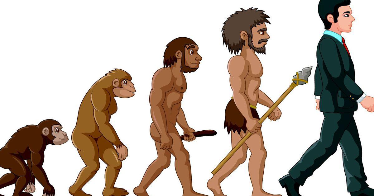 знала, что эволюционная цепочка человека картинка первые