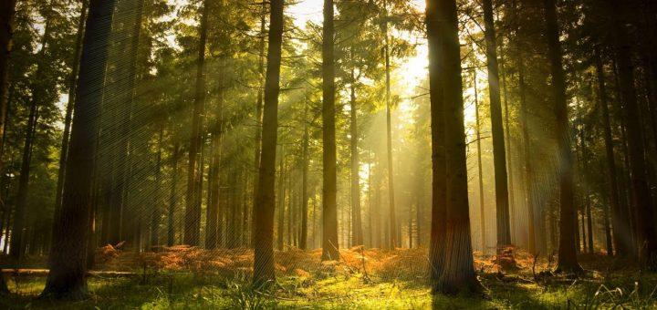 Через 15 лет Россия останется без сибирских лесов