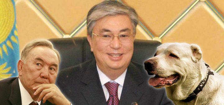 Новый президент Казахстана назвал своего алабая Нурсултаном