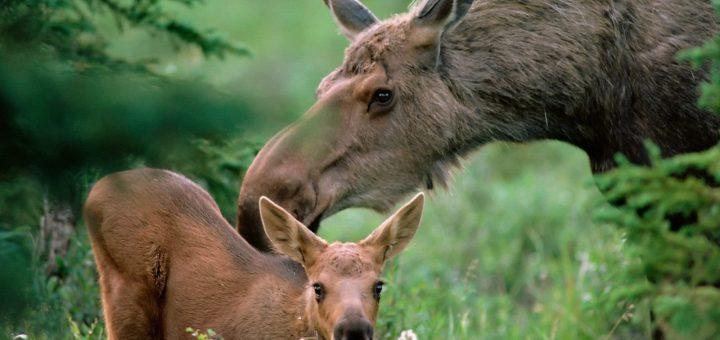 Национальный парк «Лосиный остров» оказался под угрозой