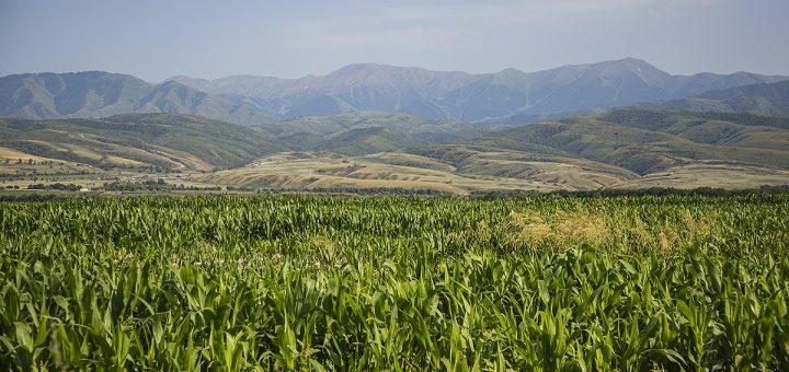 Президент Казахстана отказался продавать землю иностранцам